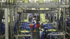 Taylor Farms Processing Plant
